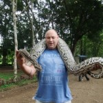 Philippine Python